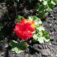 Летний проект «Мой цветущий сад», Балтачевская центральная библиотека