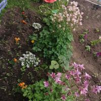 Тучубаевская сельская библиотека представляет фотографии садовых участков