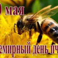 Детская модельная библиотека отмечает Всемирный день пчёл